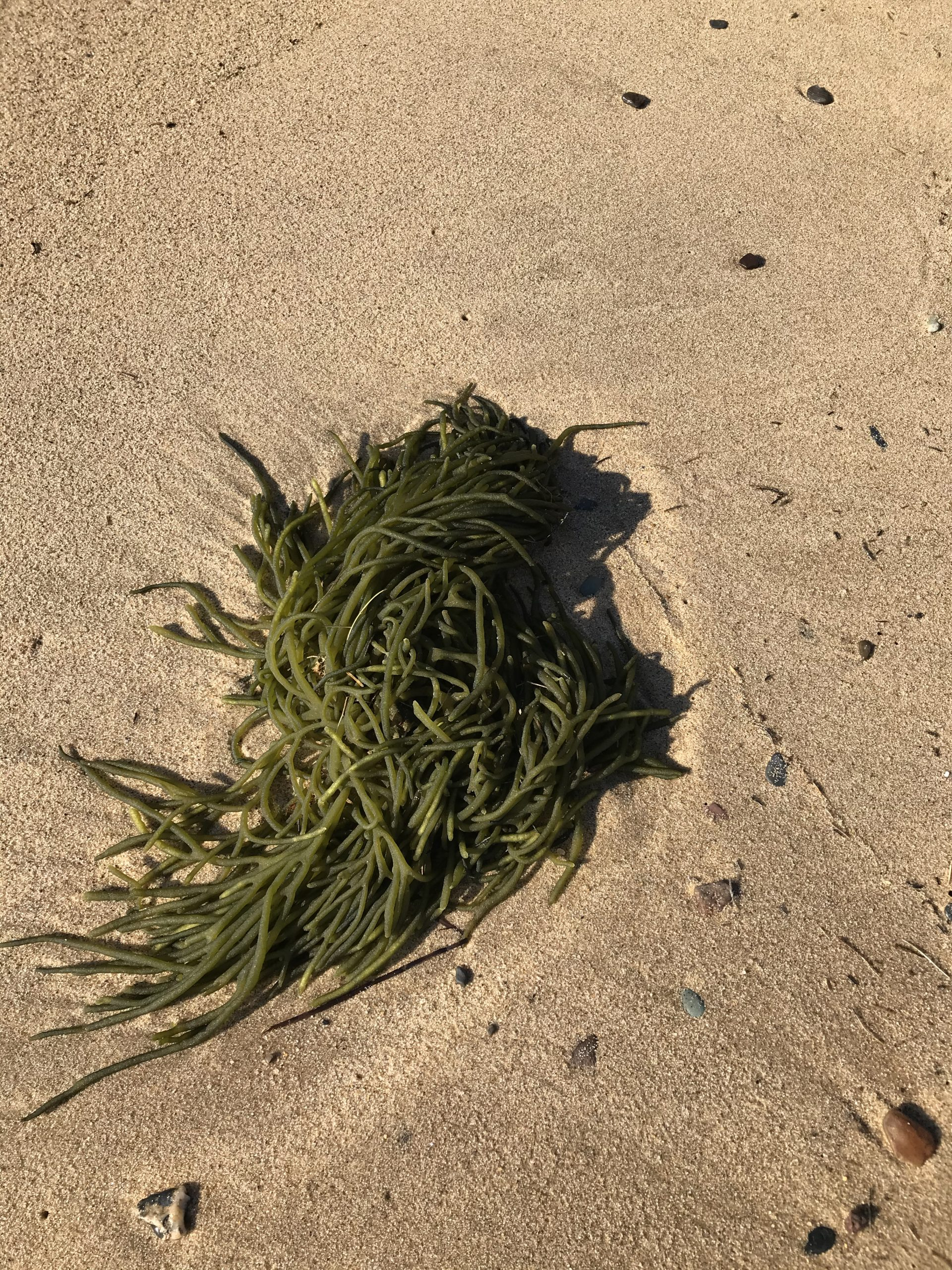 Some seaweed